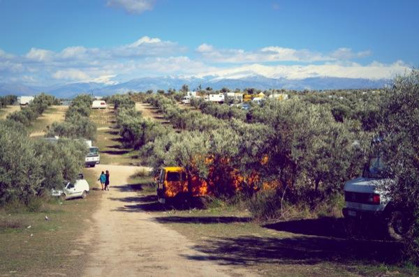 dragoff-trucks-in-trees