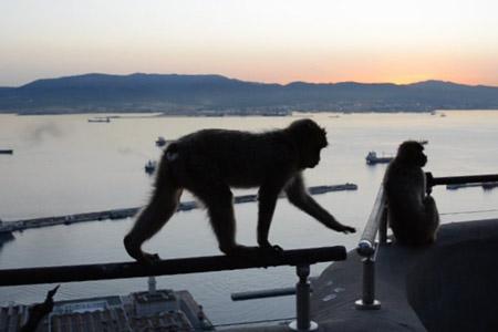 monkey-on-railing