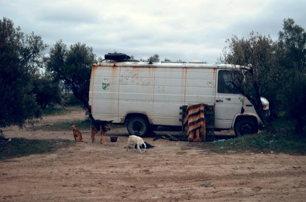 techno-dogs