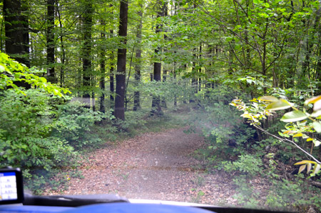 driving-into-forrest-off-track