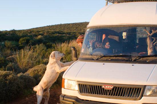 goodbye-whitedog
