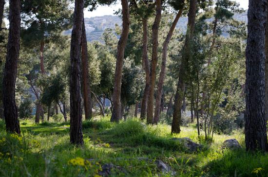 wildcamping-greece-nature