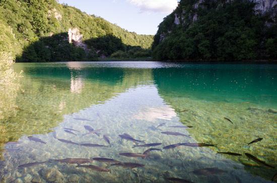 plitvicka-croatia-water-fish