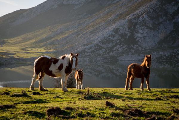 picos-de-europa-glacial-lakes-covadonga-horses-1