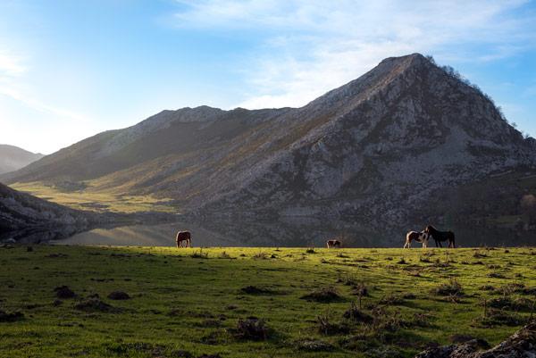 picos-de-europa-glacial-lakes-covadonga-horses-3