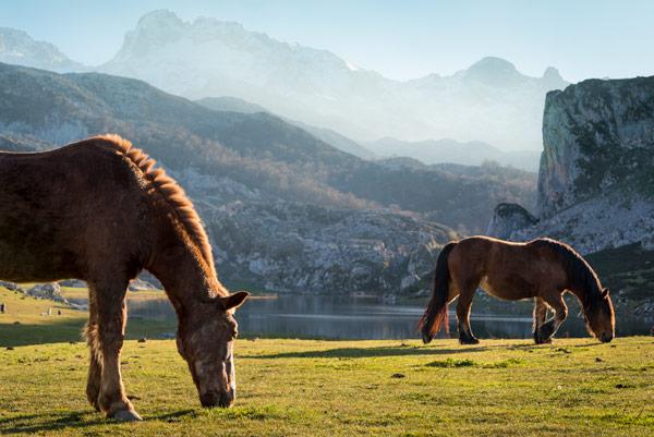 picos-de-europa-glacial-lakes-covadonga-horses-4