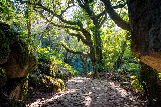 sintra-portugal-exotic-trees-forest