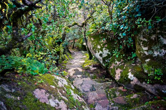 sintra-portugal-pena-gardens-forest