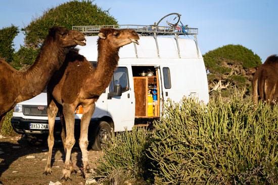 Morocco-by-campervan-sidi-kaouki-beach-camel