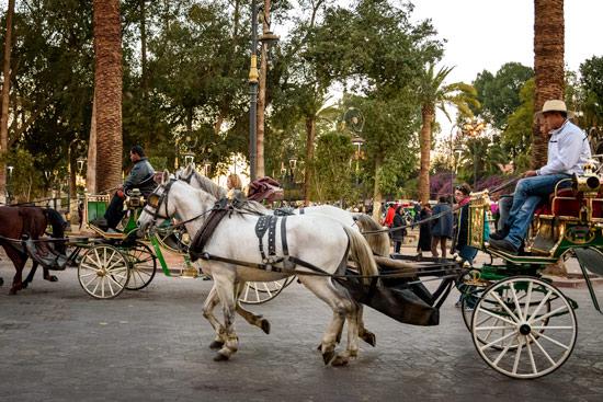 morocco-campervan-marrakech-horse-cart