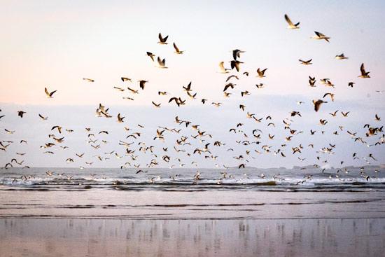 morocco-essaouira-campervan-birds