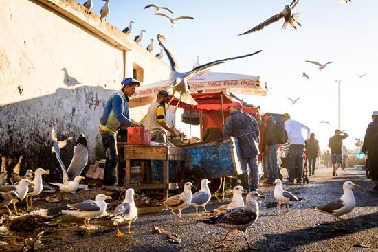 morocco-essaouira-campervan-fish-market