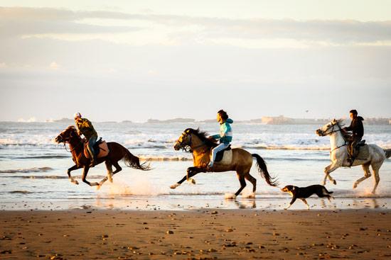 morocco-essaouira-campervan-horses-on-beach