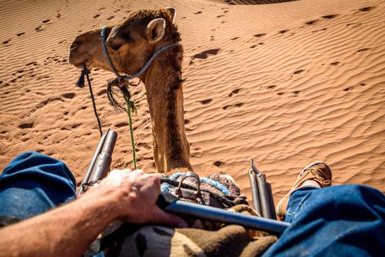 morocco-by-campervan-sahara-desert-camel-view