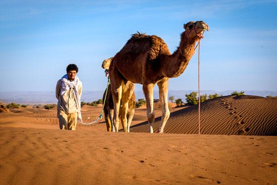 morocco-by-campervan-sahara-desert-camel2