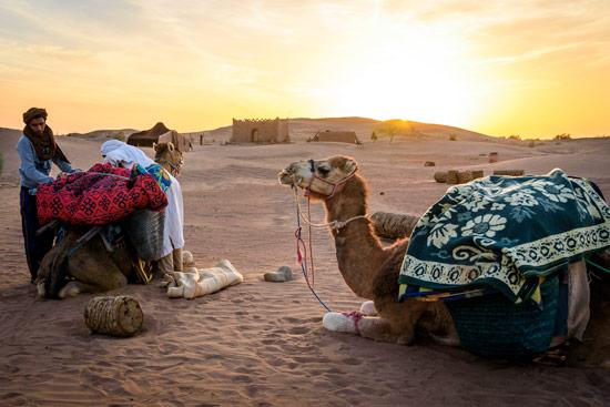morocco-by-campervan-sahara-desert-loading-camels