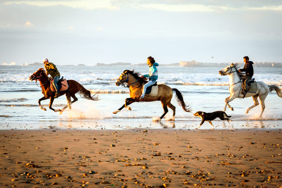 reasons-to-come-to-morocco-campervan-horses-beach
