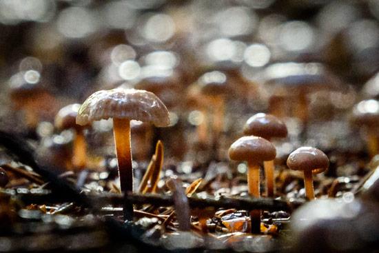 campervan-wildcamping-yorkshire-moors-mushrooms