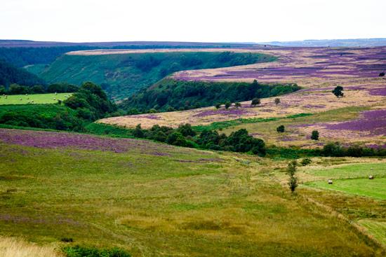campervan-wildcamping-yorkshire-moors-purple-heather