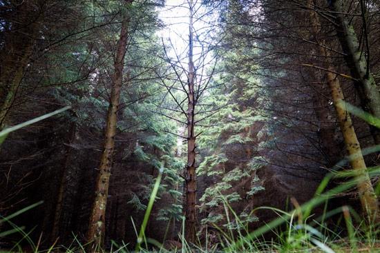 campervan-wildcamping-yorkshire-moors-tall-trees