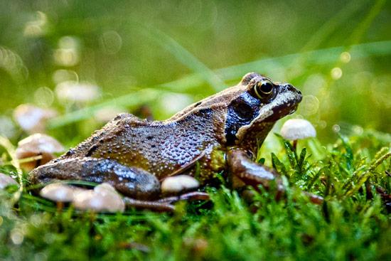 campervan-wildcamping-yorkshire-moors-toad